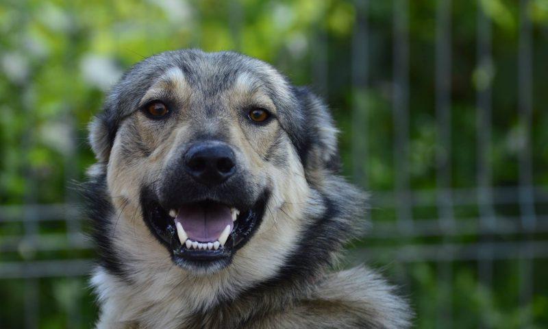 Dacă iubiți câinii vagabonzi luați-i acasă!